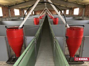 Tolvas engorde en instalaciones porcino